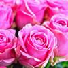 Fresh Cut Rose Fragrance Oil - Bulk