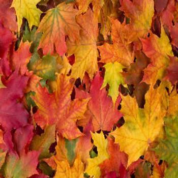 Leaves - Type* Fragrance Oil