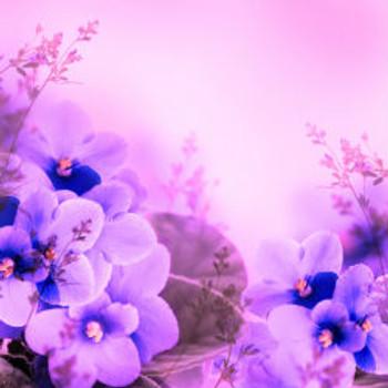 Secret Wonderland - Type* Fragrance Oil