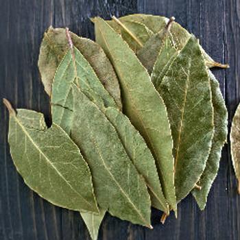 Tobacco & Bay Leaf Fragrance Oil