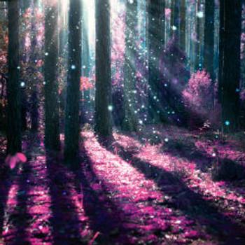 Enchanted Woods Fragrance Oil
