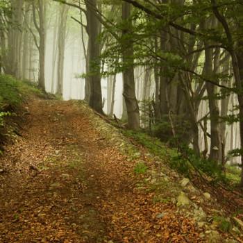Forest Hike Fragrance Oil
