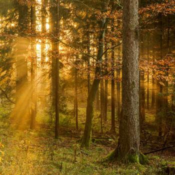 Into the Woods Fragrance Oil - Bulk