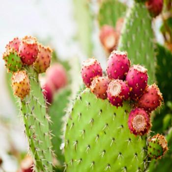 Baja Cactus Blossom - Type* Fragrance Oil - Bulk