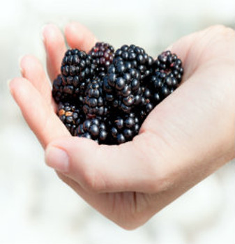 Blackberry & Cream Fragrance Oil - Bulk