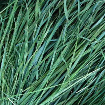 Sweetgrass Fragrance Oil - Bulk