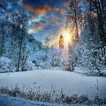 Iced Vanilla Woods - Type* Fragrance Oil - Bulk