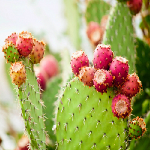 Baja Cactus Blossom - Type* Fragrance Oil