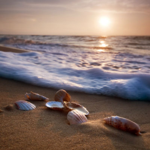Beach Memories Fragrance Oil