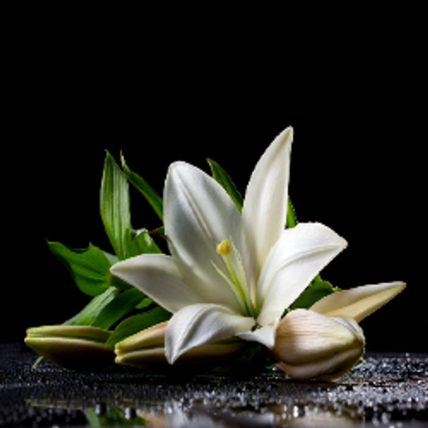 Calming Lily Fragrance Oil