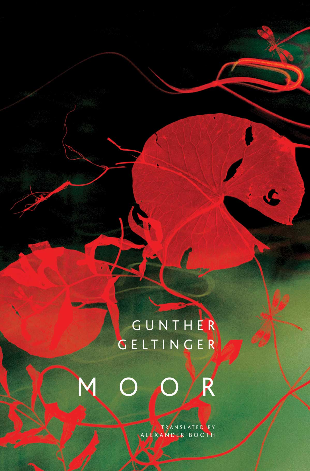 Moor by Gunther Geltinger | Seagull Books