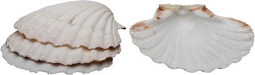 HIC Natural Baking Shell, Large, Set 4