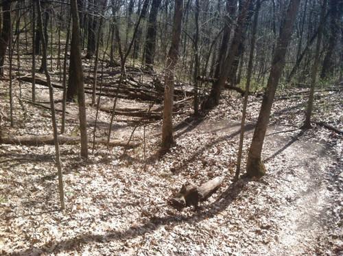 Spring Mountain Biking
