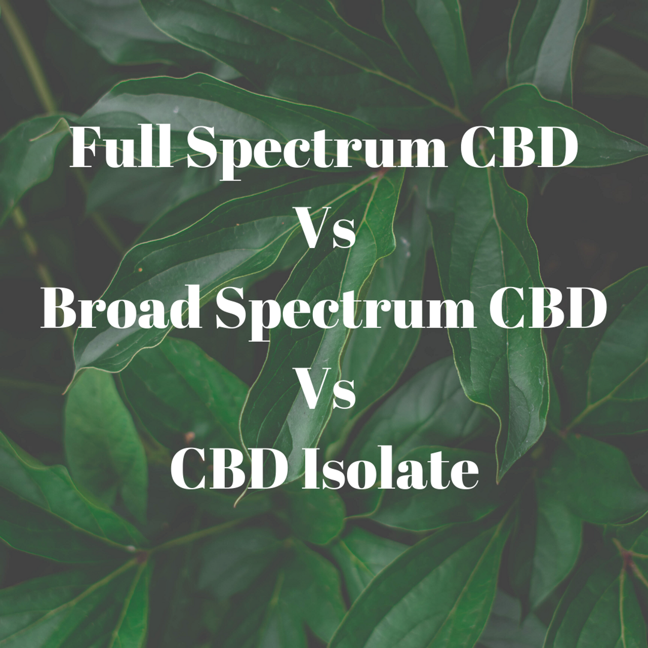 Types of CBD and what we use..
