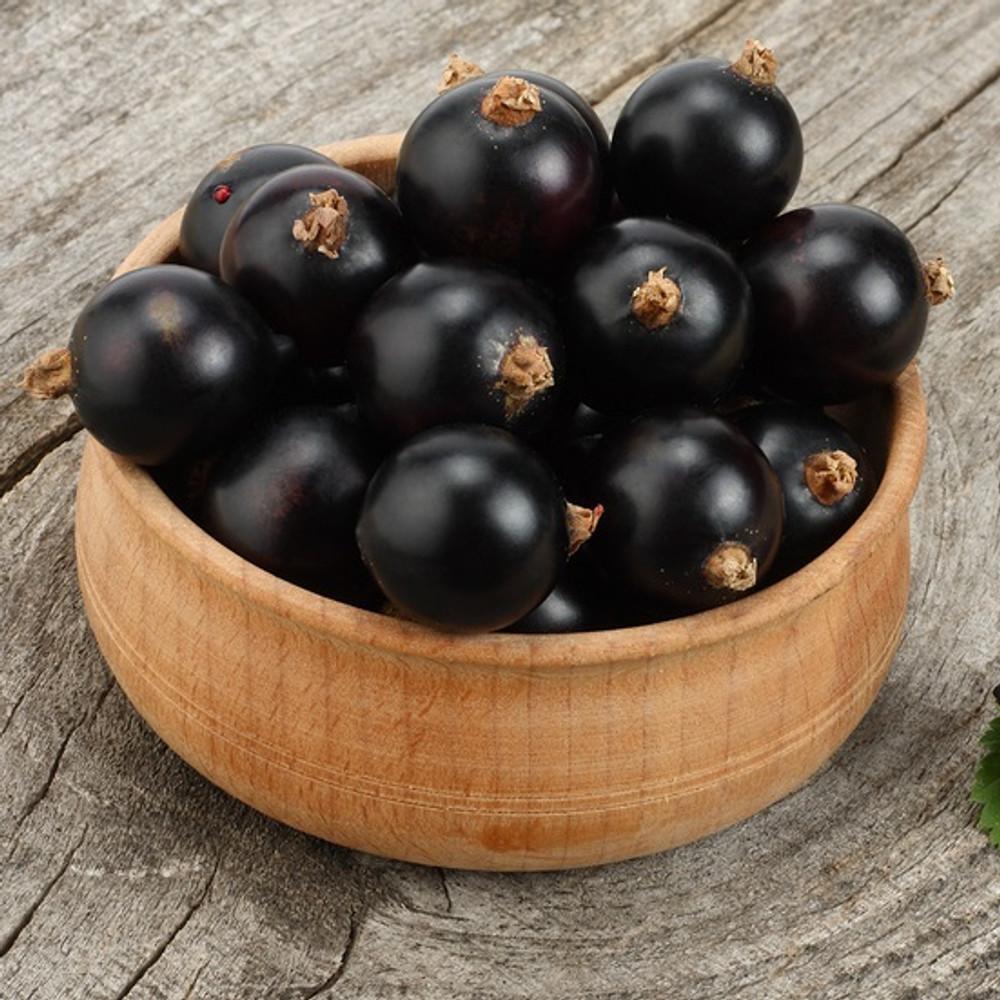 Black Currant Oil-Refined - GLA 14%