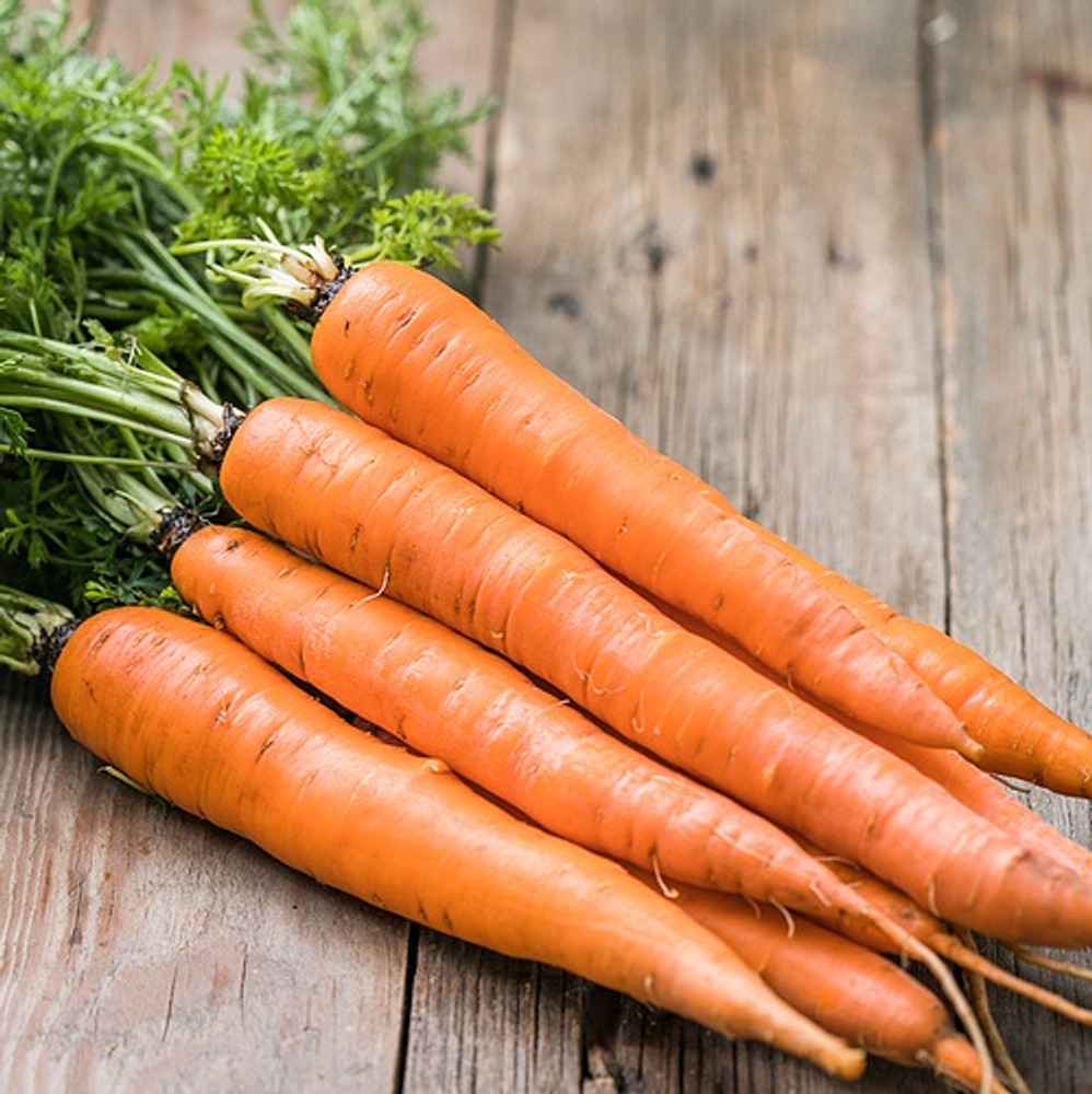 Carrot Seed Oil - Virgin, Cold Pressed