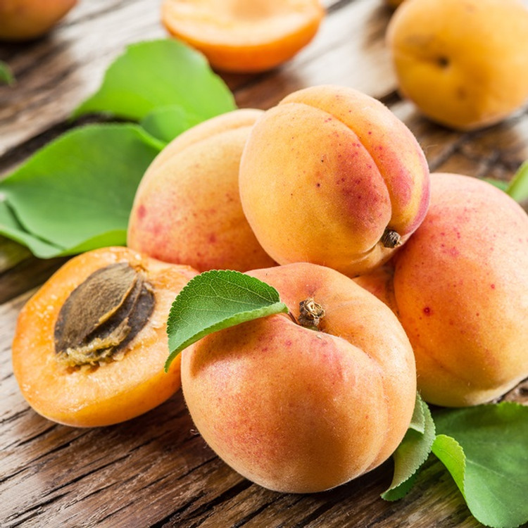 Apricot Kernel Oil-Refined