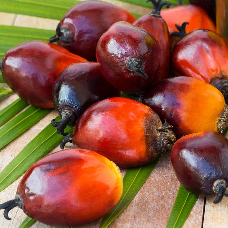 Palm Kernel Oil - Flakes