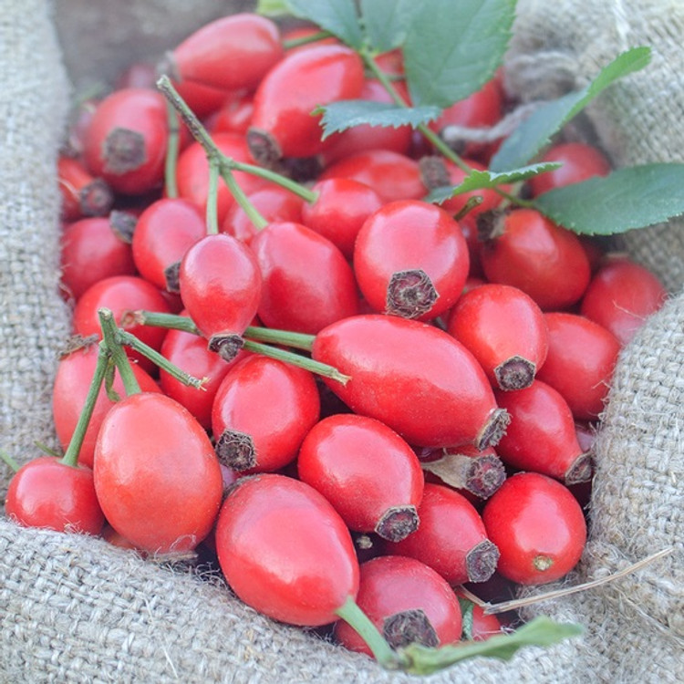 Rosehip Seed Oil - Refined