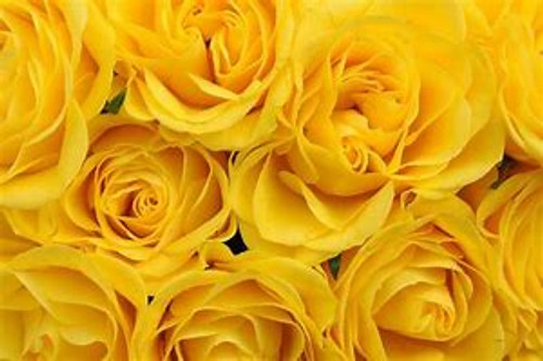 A dozen gorgeous Yellow roses are the perfect romantic gift to send to the one who's always on your mind and in your heart.