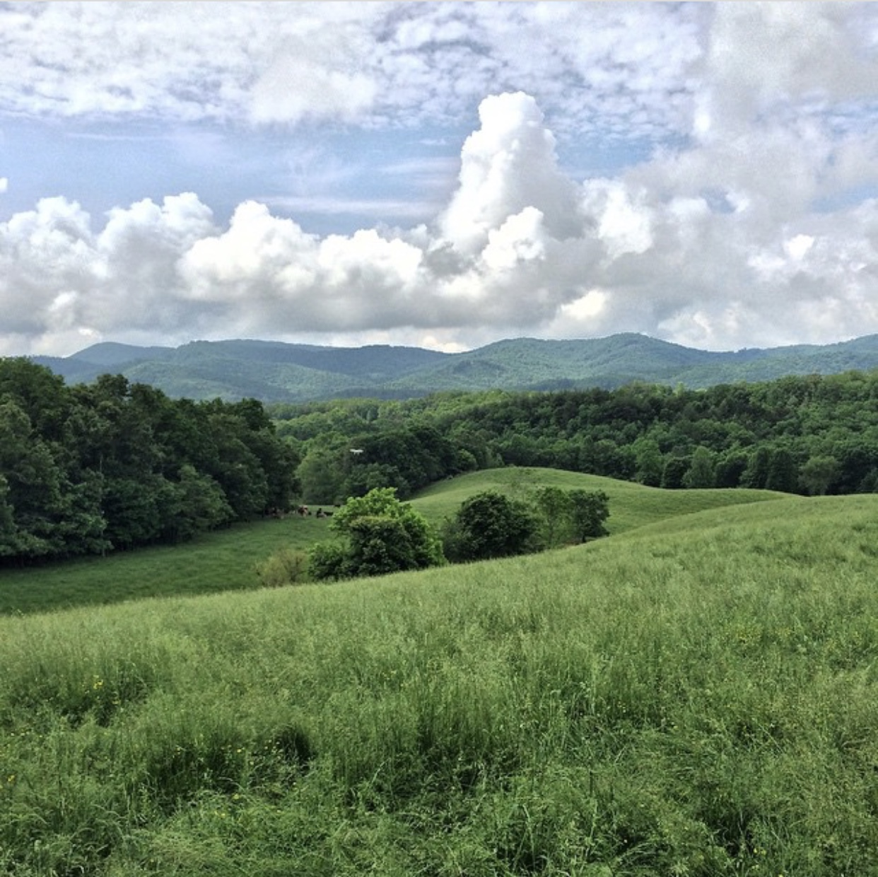 Ridgefield Farms, Brasstown, NC - Steve Whitmire