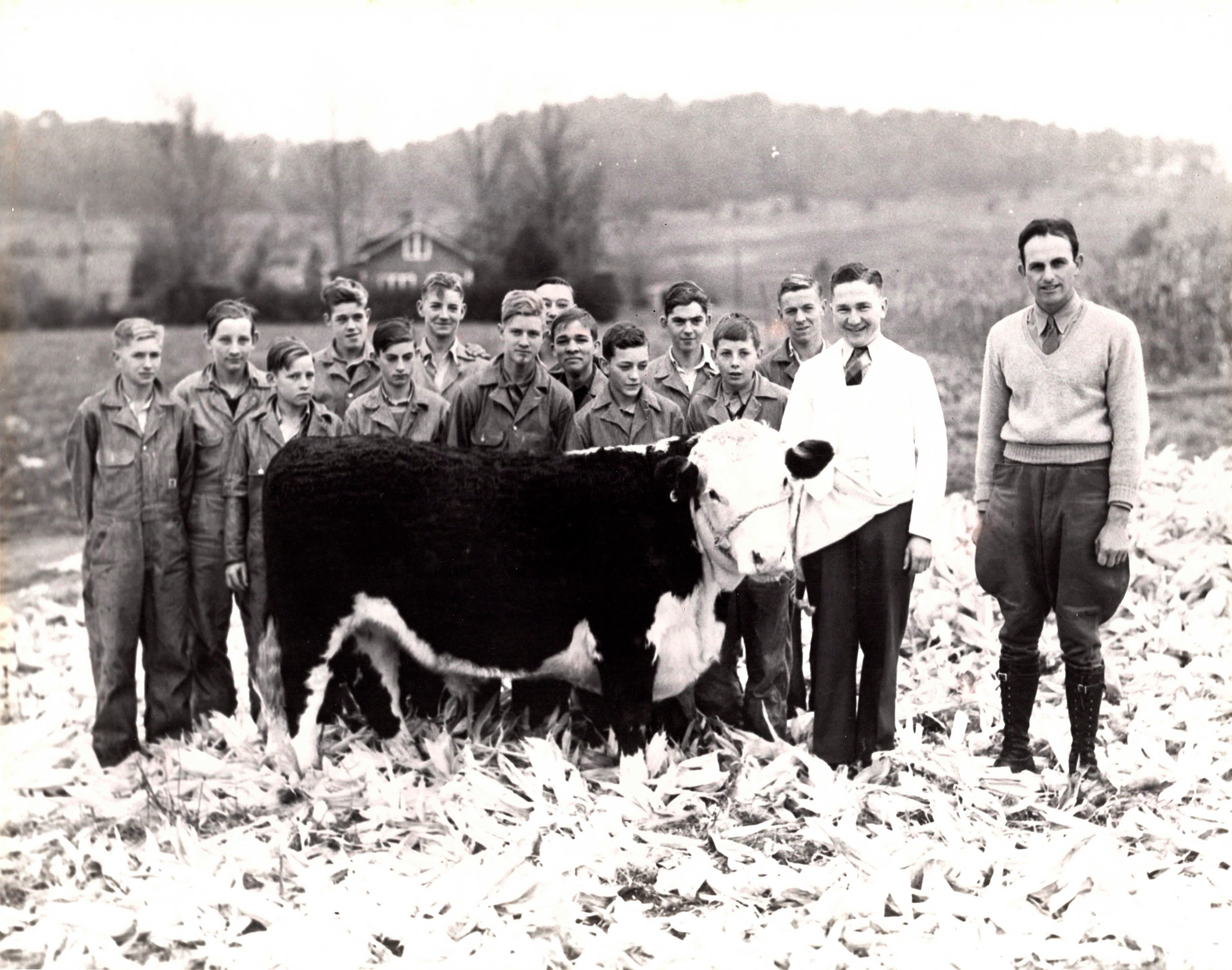 Brasstown Beef - Our Story