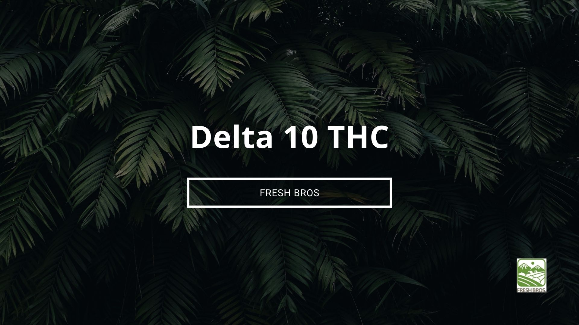 What is Delta 10: Everything You Need to Know About Delta 10 Tetrahydrocannabinol
