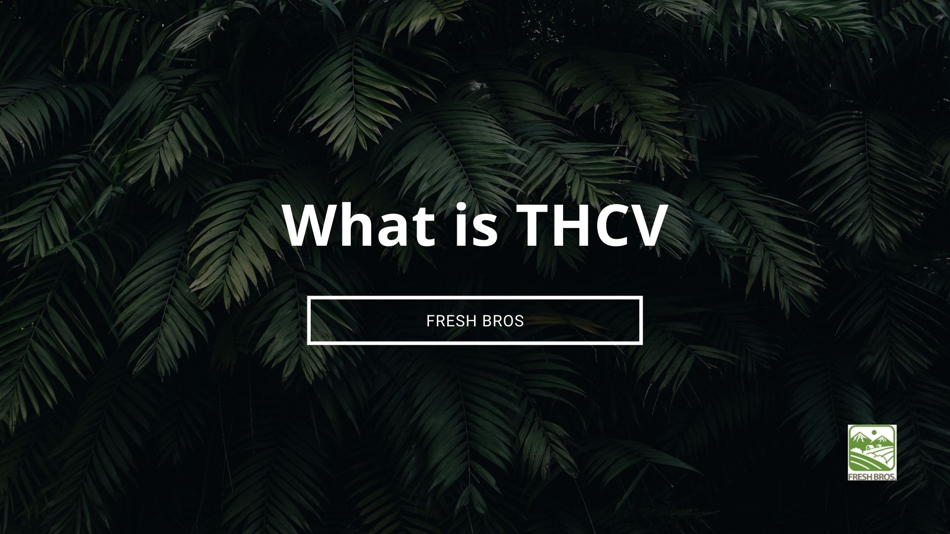 What is THCV: Everything You Need to Know About THCV, the Weight Loss Cannabinoid