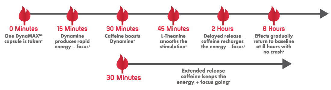 DynaMAX Enhanced Caffeine Timeline of Action