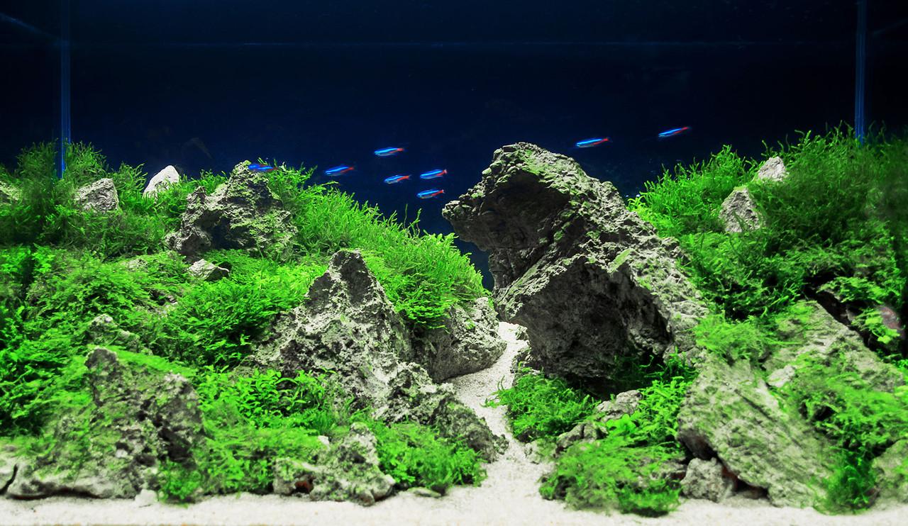 Aquarium Plants Com Florida Fresh Aquarium Plants Supplies How can i go arizona nature aquatics? florida fresh aquarium plants
