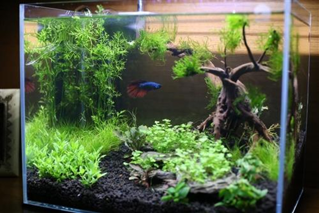 Custom Aquarium Aquascape Design