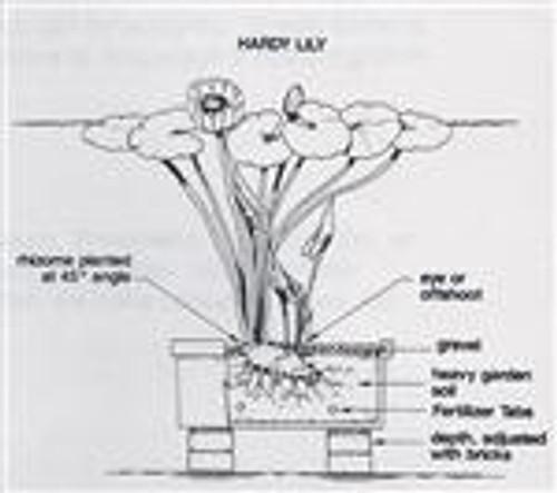 API PondCare Aquatic Plant Tabs 25-CT