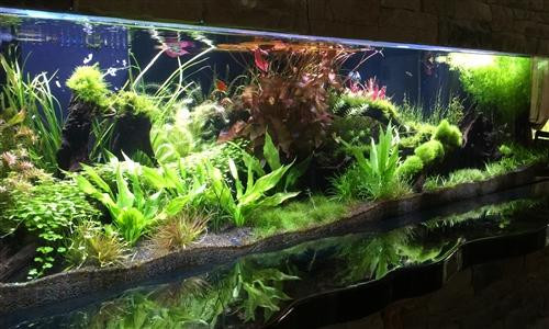 AquaScapes (custom designed) Turn-Key Aquarium