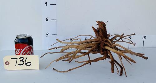Spider Wood - DW736