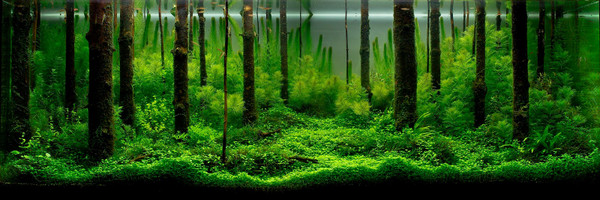 12 Plant Assortment