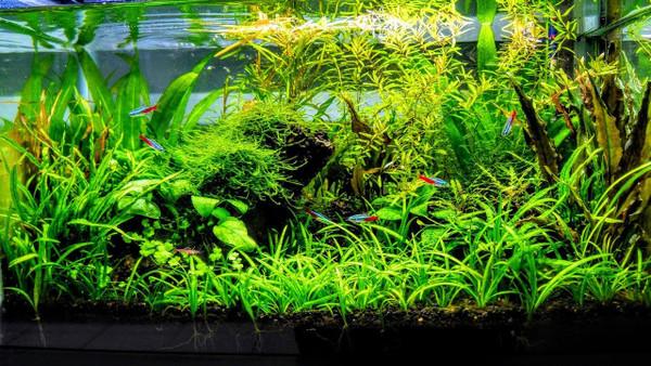 12 Plant Assortment Hardy-Low Light