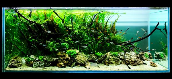 24 Plant Assortment Hardy-Low Light