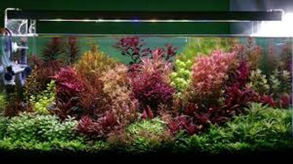 36 Plant Assortment