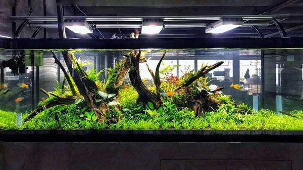 36 Plant Assortment Hardy-Low Light
