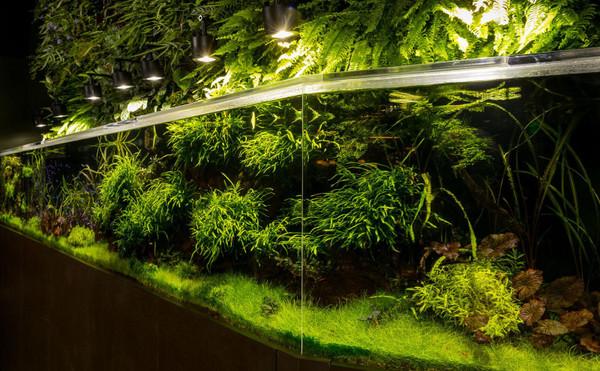 60+ Plant Assortment