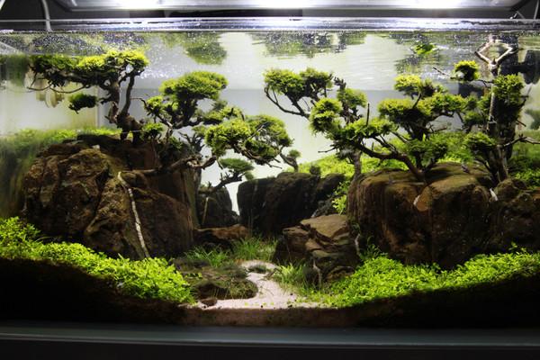 80+ Plant Assortment