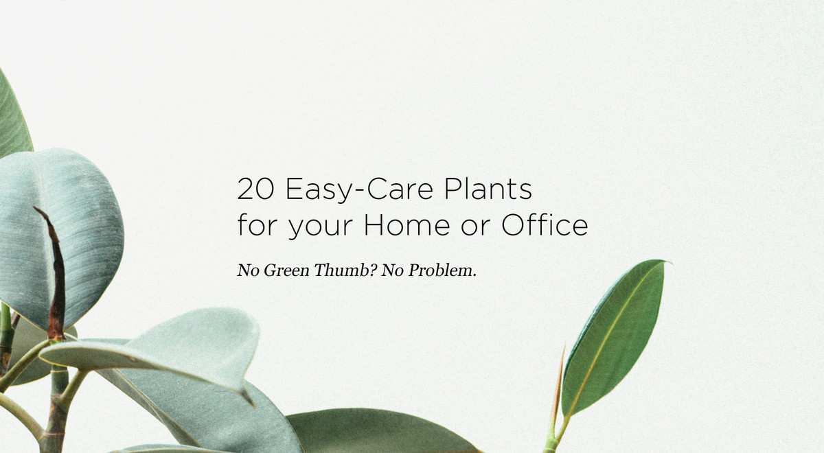 20 Easy-Care Plants for your Home or Office