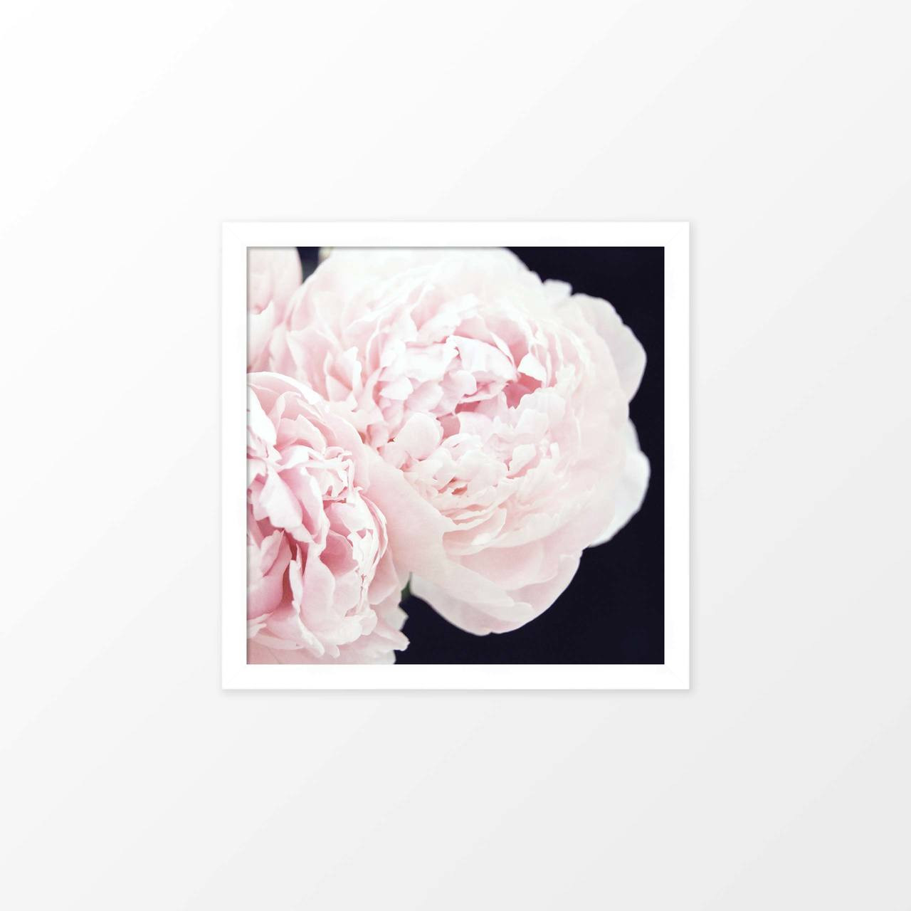 'Peonies III' flower photography poster from The Printed Home