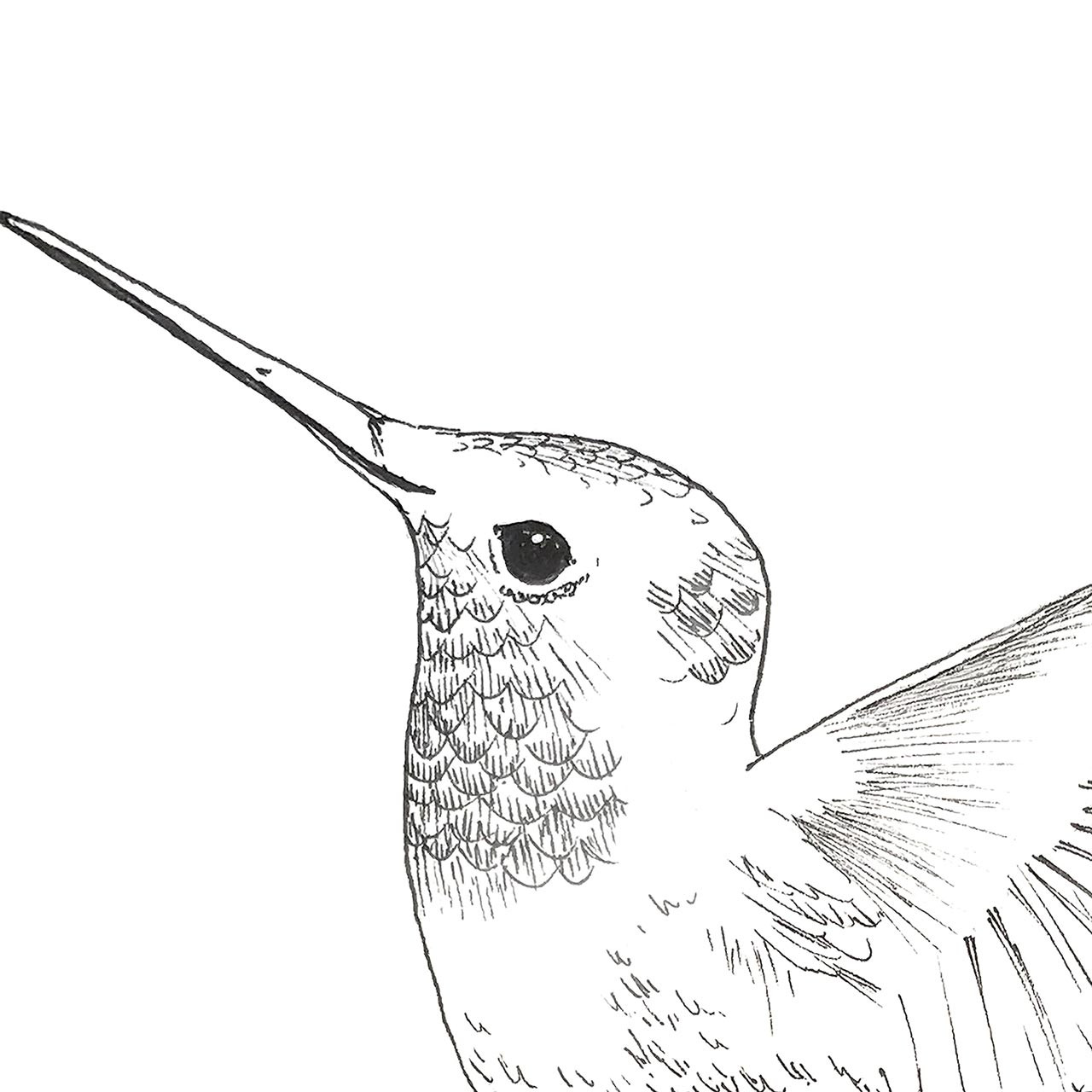 Close-up of 'Hummingbird' Hand-Drawn Art Print from The Printed Home