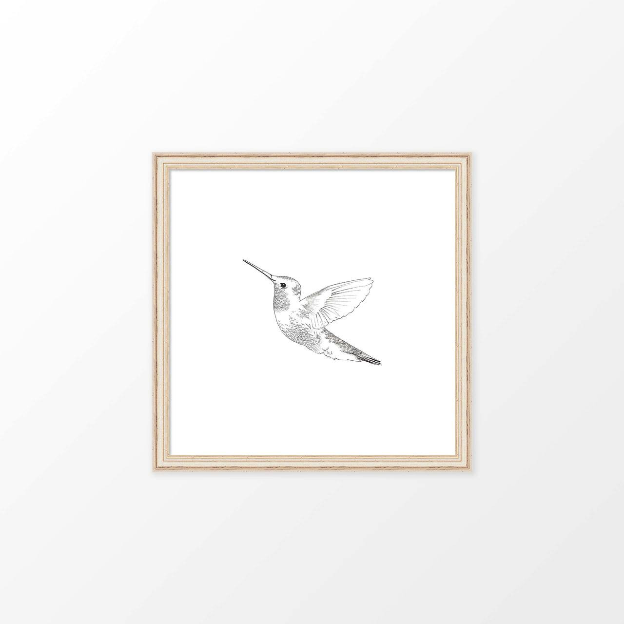 'Hummingbird' Hand-Drawn Art Print from The Printed Home