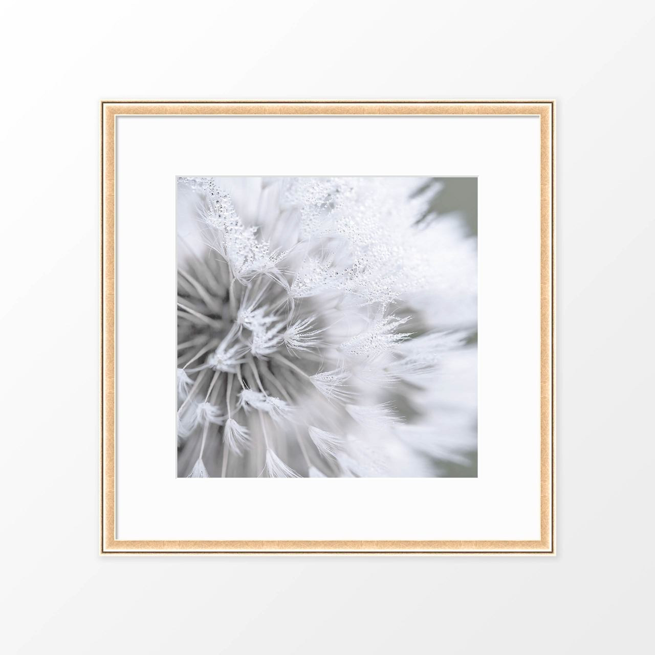 'Dandelion' Photography Poster from The Printed Home