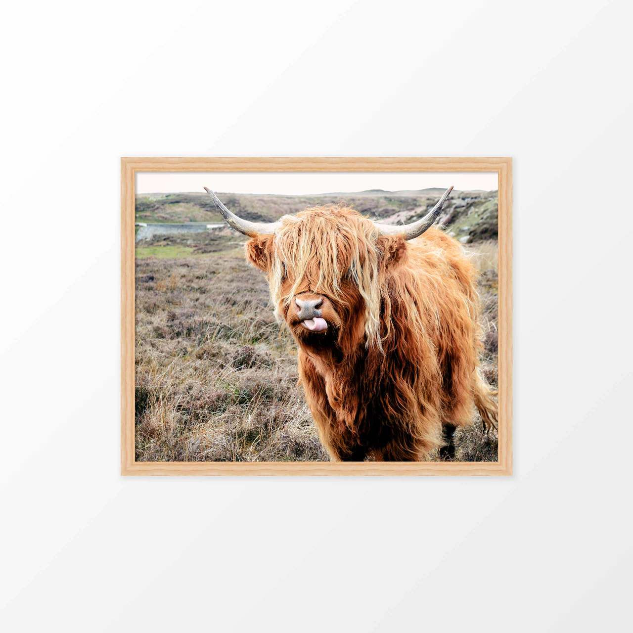 'Highland Cow' Photography Poster from The Printed Home