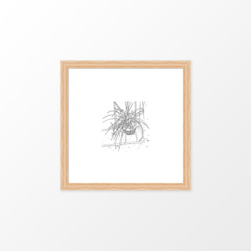 'Spider Plant' Art Print (ink drawing by David Cobley) from The Printed Home