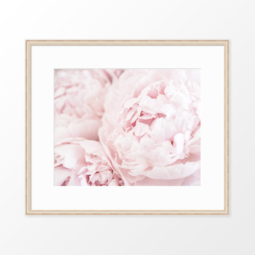 'Peonies I' flower photography poster from The Printed Home