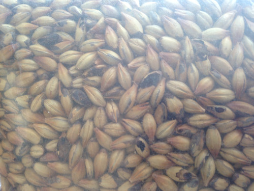 Briess 2-Row Brewers Malt 1 Lb